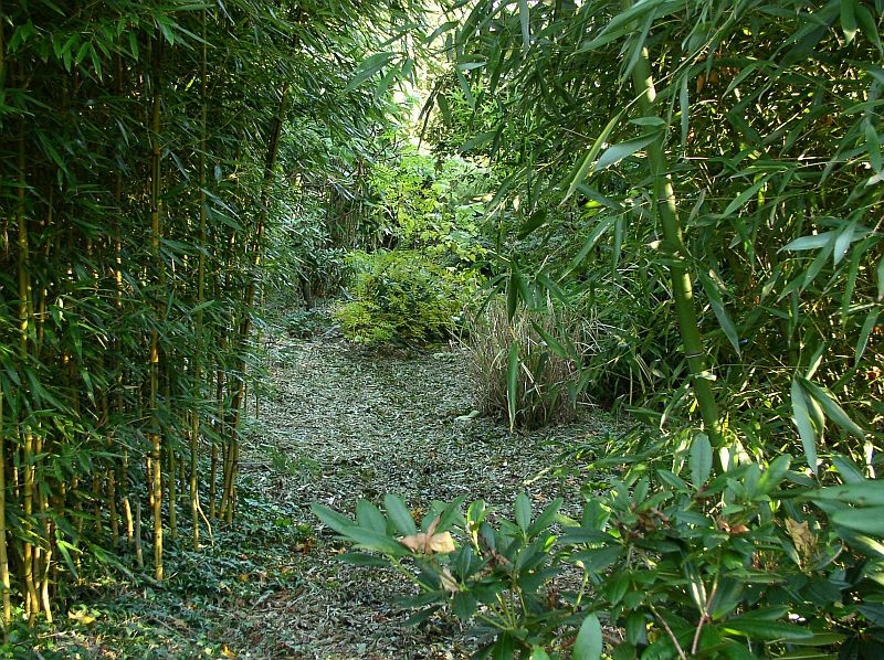 http://bambusy.info/img/uploaded/Exotera-01.jpg