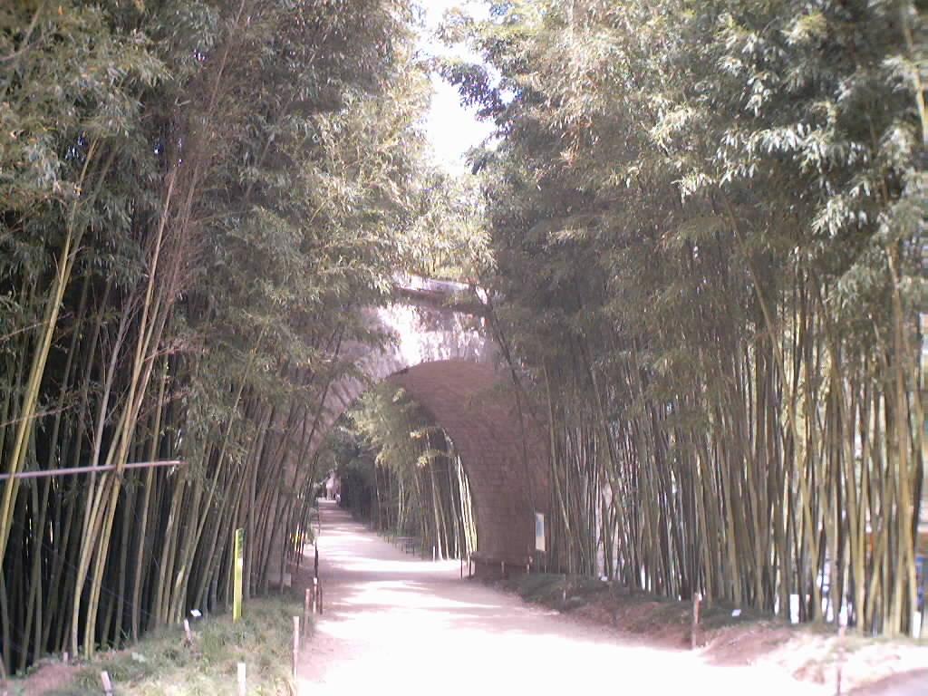 http://bambusy.info/img/uploaded/Picture%20164.jpg