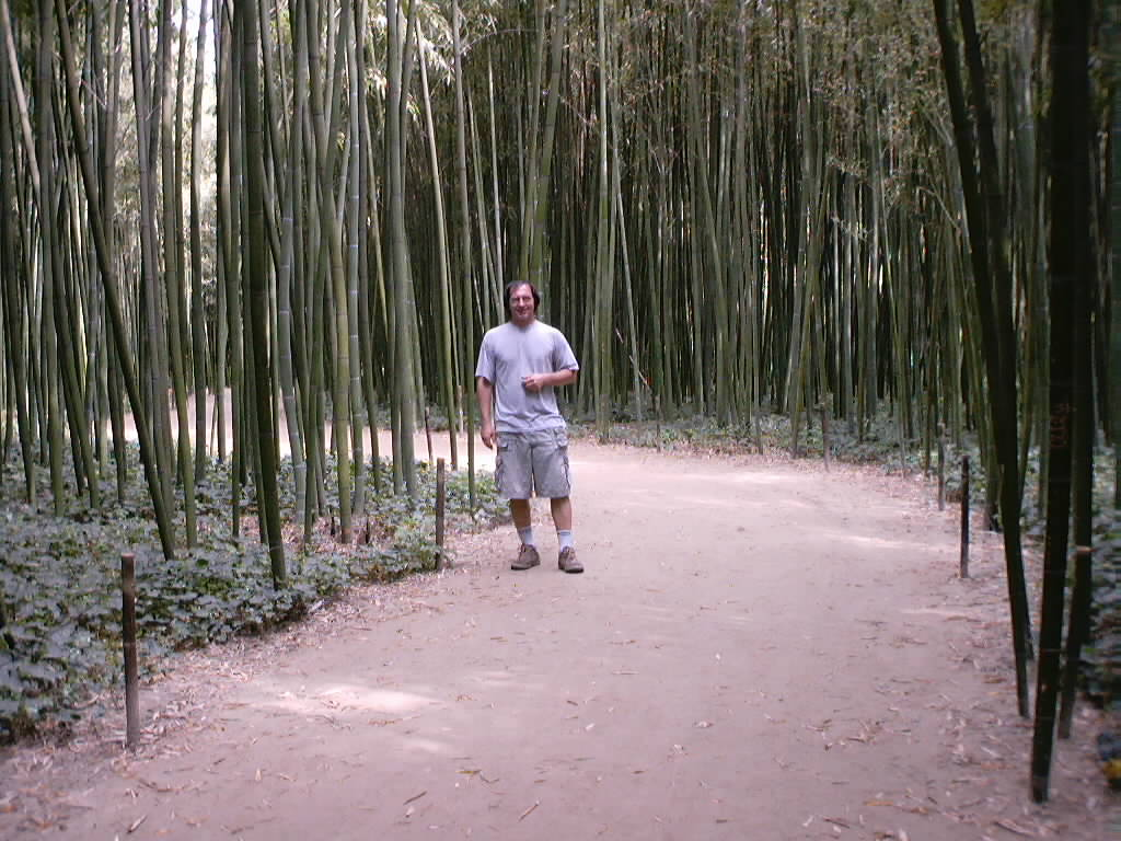 http://bambusy.info/img/uploaded/Picture%20167.jpg