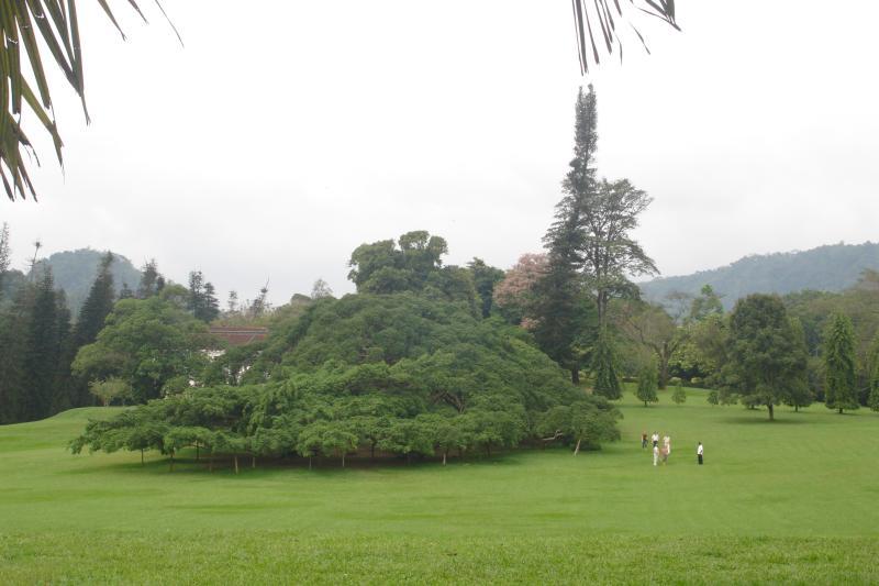 http://bambusy.info/img/uploaded/Sri-Lanka-Botanicka-zahrada-Kandy-01.jpg