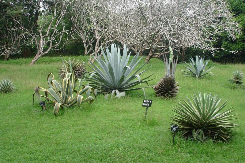 http://bambusy.info/img/uploaded/Sri-Lanka-Botanicka-zahrada-Kandy-05.jpg