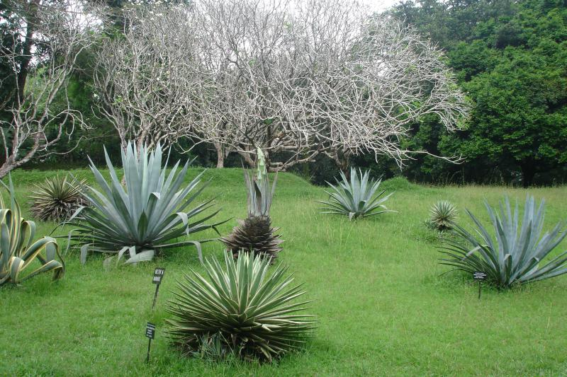 http://bambusy.info/img/uploaded/Sri-Lanka-Botanicka-zahrada-Kandy-06.jpg