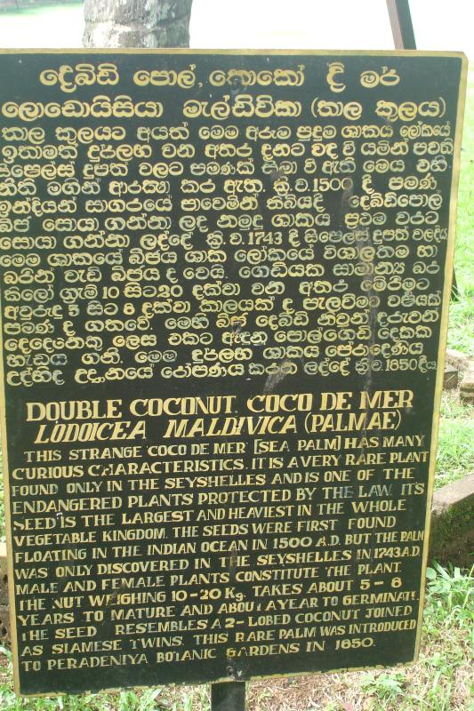 http://bambusy.info/img/uploaded/Sri-Lanka-Botanicka-zahrada-Kandy-09.jpg